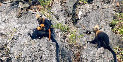 Bảo vệ Di sản thiên nhiên Cát Bà-trách nhiệm của cả cộng đồng