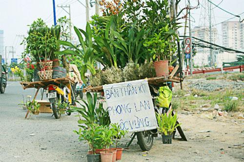 Choáng với trò bịp của dân bán cây dạo trên phố Hà Nội