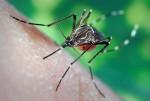 Hà Nội chi thêm 14 tỷ đồng phòng chống dịch sốt xuất huyết