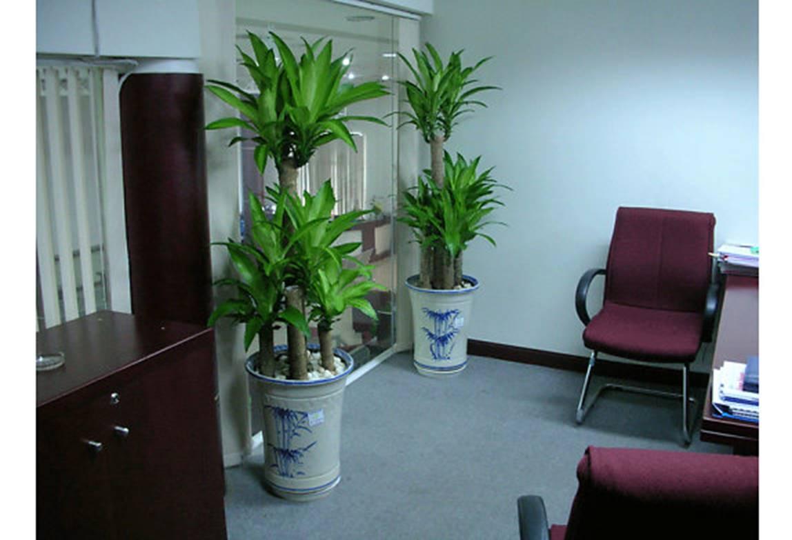 Những loại cây trồng trong nhà cải thiện sức khỏe