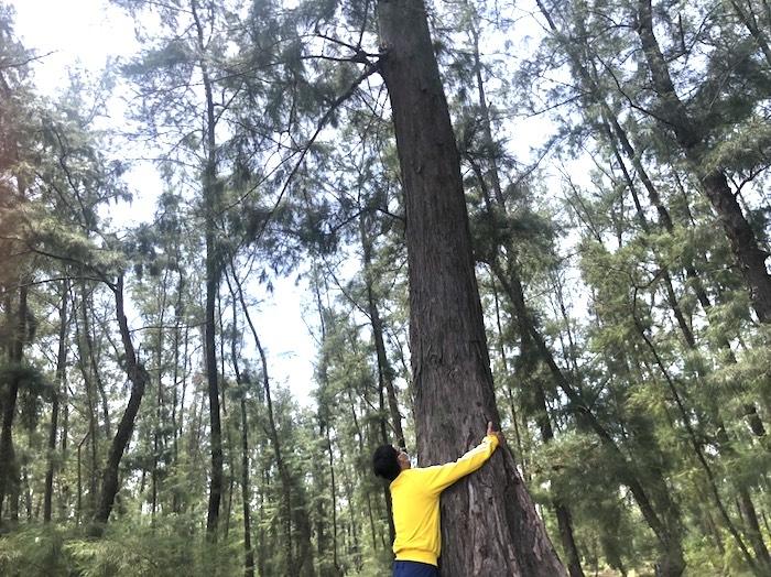 Quảng Ngãi muốn hạ rừng phòng hộ ven biển để làm đường