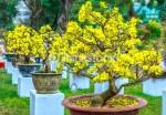 Những loại cây nên trồng dịp cuối năm
