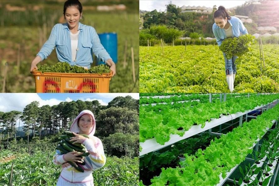 Một ngày làm nông dân hái rau, củ tại vườn 50 hecta ở Đà Lạt của Lý Nhã Kỳ