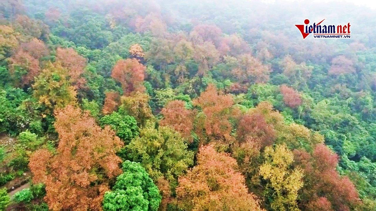 Thăm chùa cổ, lạc lối giữa rừng phong thay lá lớn nhất Việt Nam