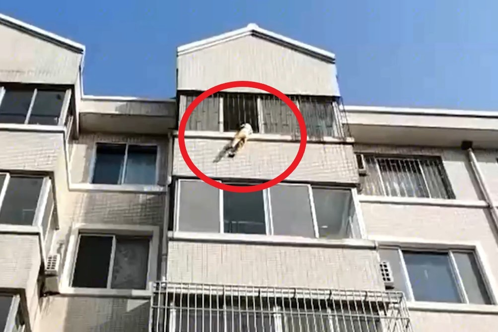 Cứu bé 5 tuổi đu ngoài cửa sổ ở Trung Quốc