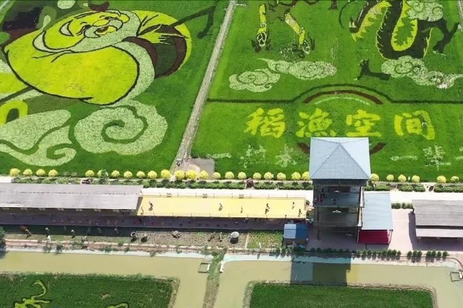Nông dân biến cánh đồng lúa thành tranh nghệ thuật ở Trung Quốc