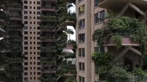 Muỗi tấn công chung cư xanh ở Thành Đô