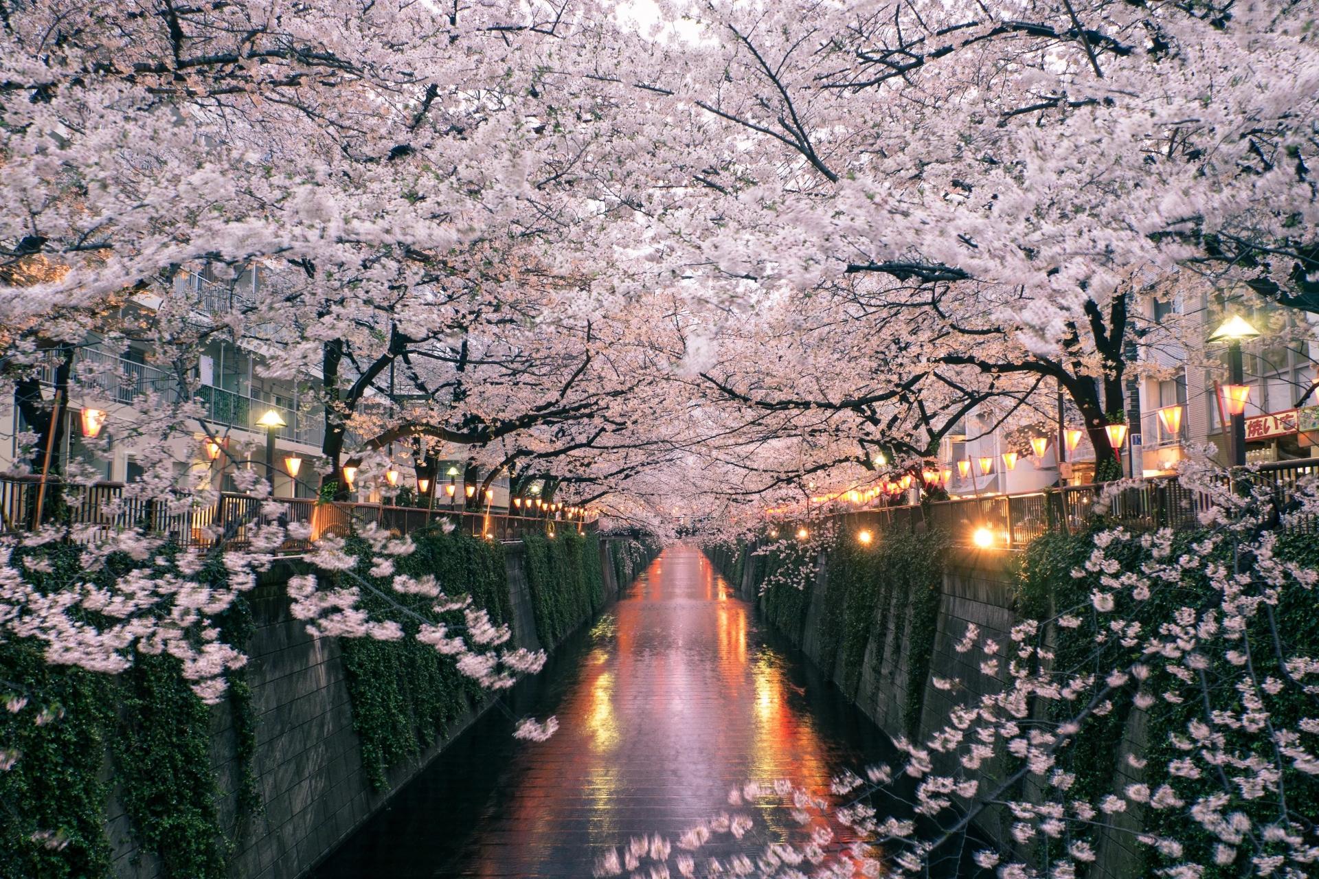 Vẻ đẹp bốn mùa ở Nhật Bản tựa chốn thần tiên