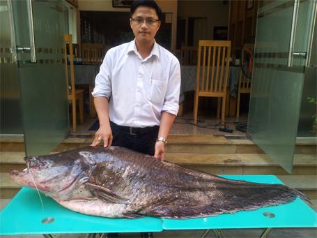 """Cá """"lạ"""" nặng 62kg, dài gần 2m từ Campuchia về Hà Nội"""