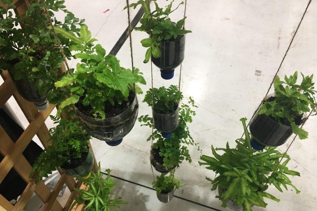 Hướng dẫn trồng cây trong nhà bằng chai nhựa