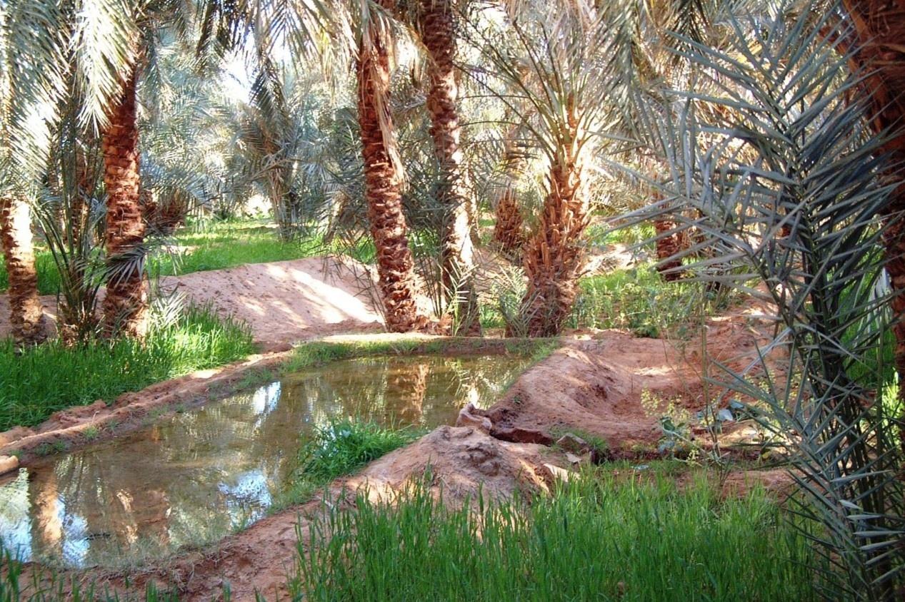 Ốc đảo xanh mát giữa lòng sa mạc khô cằn