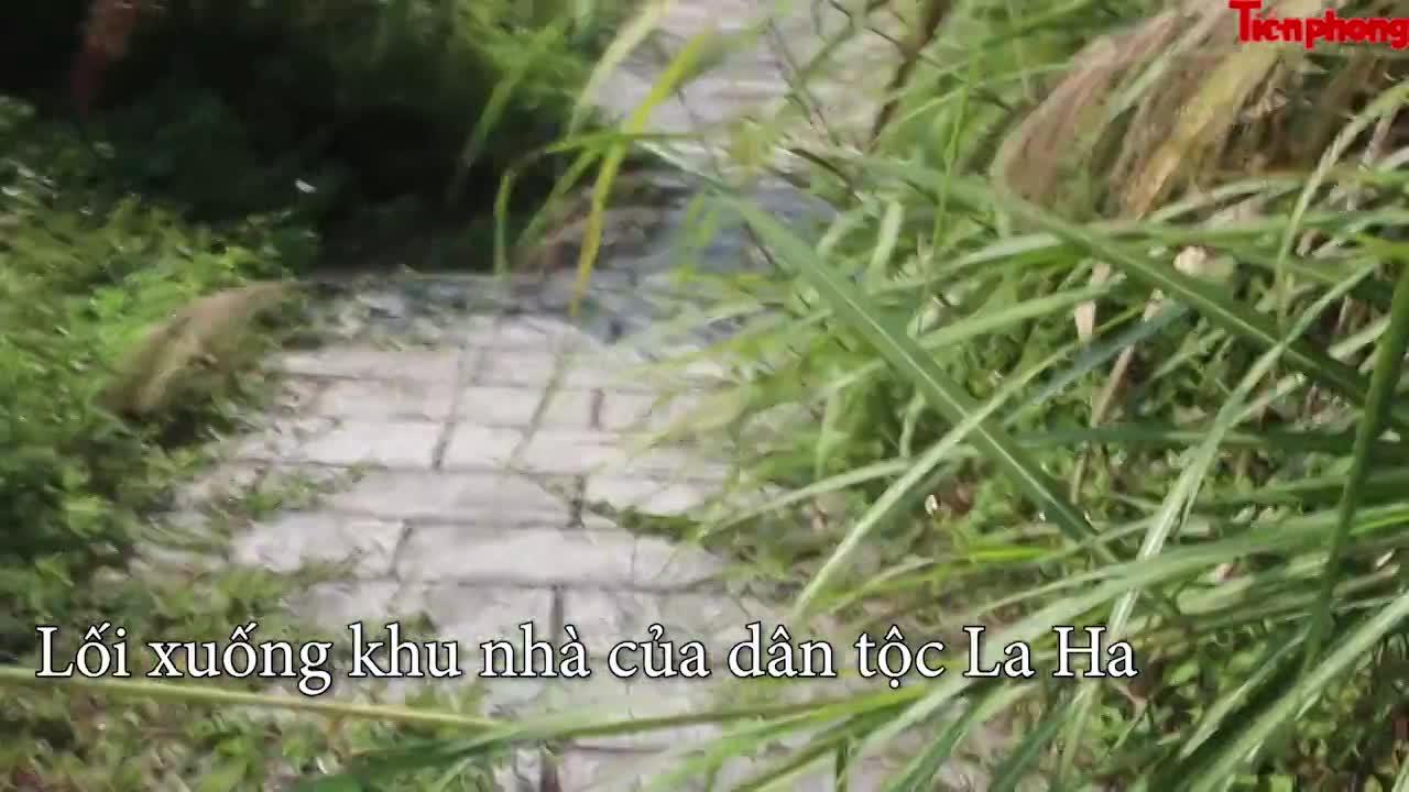 Cảnh tan hoang, rậm rạp công trình nhà mẫu làng Văn hóa - Du lịch các dân tộc