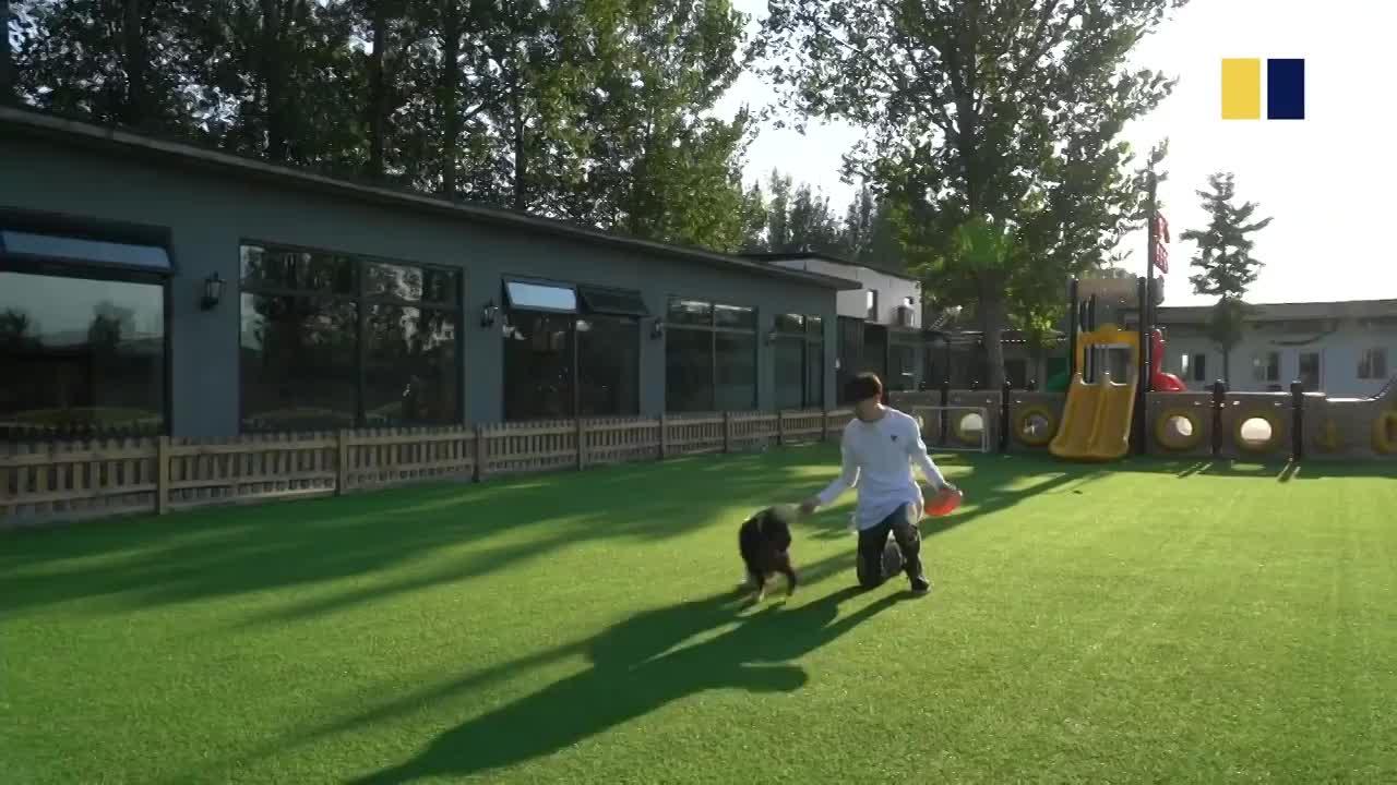 Chi hàng trăm triệu đồng xây biệt thự có bể bơi, điều hòa cho chó cưng